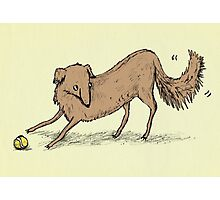Playful Dog Photographic Print