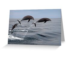 Jumping Dolphins Greeting Card