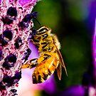 Bee'n Macro by MikeBJ