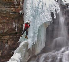 Ice Climbing Chameleon by Tim Holmes