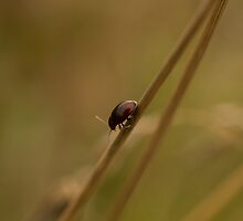 Lonely Beetle by Robert Carr