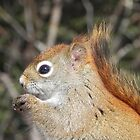 Ah Nuts, You Make My Eyes Sparkle! by Martha Medford