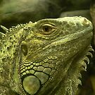 Common Iguana by Margot Kiesskalt