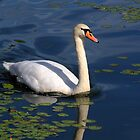 Swan Lake by Bob Martin