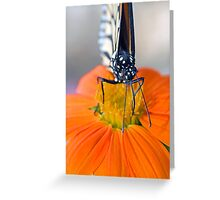 Monarch Butterfly, front view Greeting Card