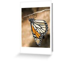 Monarch Butterfly closeup on a twig Greeting Card