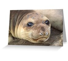 Young Elephant Seal pup Greeting Card