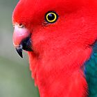 Parrot. by trevorb