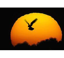 Into the sun Photographic Print