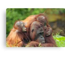 mother orangutan with her cute babies  Canvas Print
