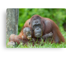 mother orangutan with her cute baby Canvas Print