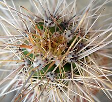 Cactus Thorns by Ye Liew