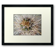 Cactus Thorns Framed Print