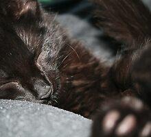 Sleepy by Kimberley Gifford