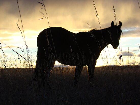 Horse Sunset Silhouette by Al Bourassa