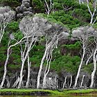 Coastal Tea Trees by Hans Kawitzki