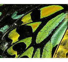 Cairns Birdwing Butterfly Close-Up Photographic Print