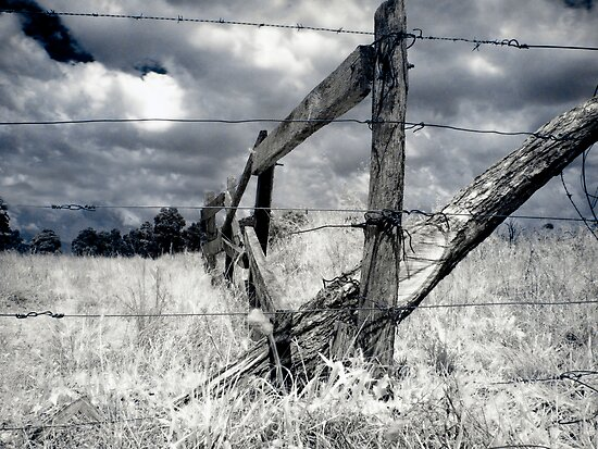Barbed-wire Fence  by Naomi Frost