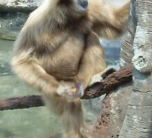 Gibbon by mwfoster