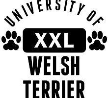 University Of Welsh Terrier by kwg2200