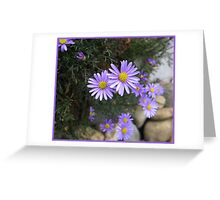 Cutleaf daisy.  _Brachyscome multifida_ Greeting Card