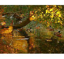 Bathing Ducks  Photographic Print