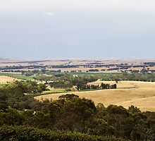 Clare Valley by Steve9