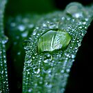 Water Droplets by Luis Correia