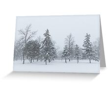 Snowstorm - Tall Trees and Whispering Snowflakes Greeting Card