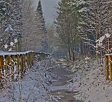 Frozen Winter Scene but where is Olaf? by Paul Hull