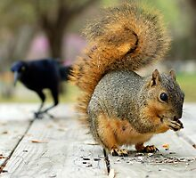 I Want Your Nuts! by deividmx