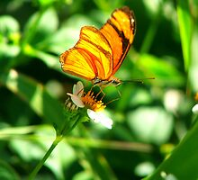 butterfly on flower by mickeyb