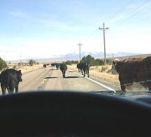 redneck rush hour,,,, by conilouz