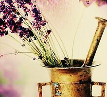 Flowers by aodena