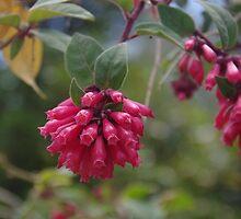 Red flowering shrub by lezvee