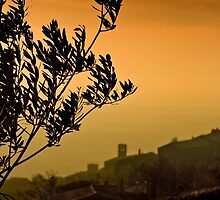 Olive tree by SpikeFlutie