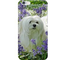 Snowdrop the Maltese -  in the Bluebell Woods iPhone Case/Skin