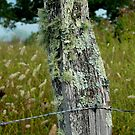 The Old Fence Post by Sherri Hamilton
