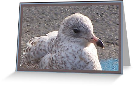 Freckled Gull by Starr1949