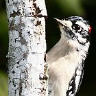 Woodpecker by Sam Hanie