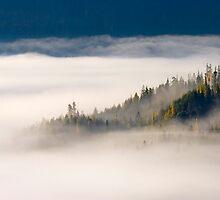 Autumn Morn by DawsonImages