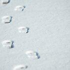 Winter Path by cshphotos