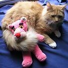 Cat with Toy by Barry Doherty