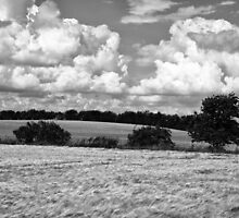 Wheat field in black and white by ronyzmbow