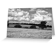 Wheat field in black and white Greeting Card