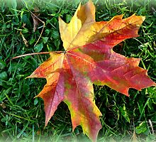 A Leaf by Charmiene Maxwell-batten