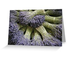 Lavenders in Provence Greeting Card