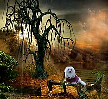 Snowdrop the Maltese - Shades of the Fall by Morag Bates