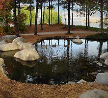 Duck Pond by Gregory Ewanowich