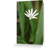 Single White Flower Greeting Card
